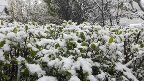 Opady śniegu w Trójmieście. Mieszkańcy: z tą zimą w maju to tak na serio?