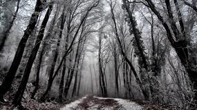 Zimska idila je od Fruške gore napravila ČAROBNU ŠUMU