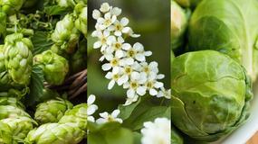Warzywa i zioła, które poprawiają kobiecość ale niszczą męskość