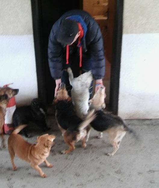 Radnici se trude da svakom psu pomognu