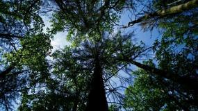Ovako izgleda poslednja velika prašuma u Evropi