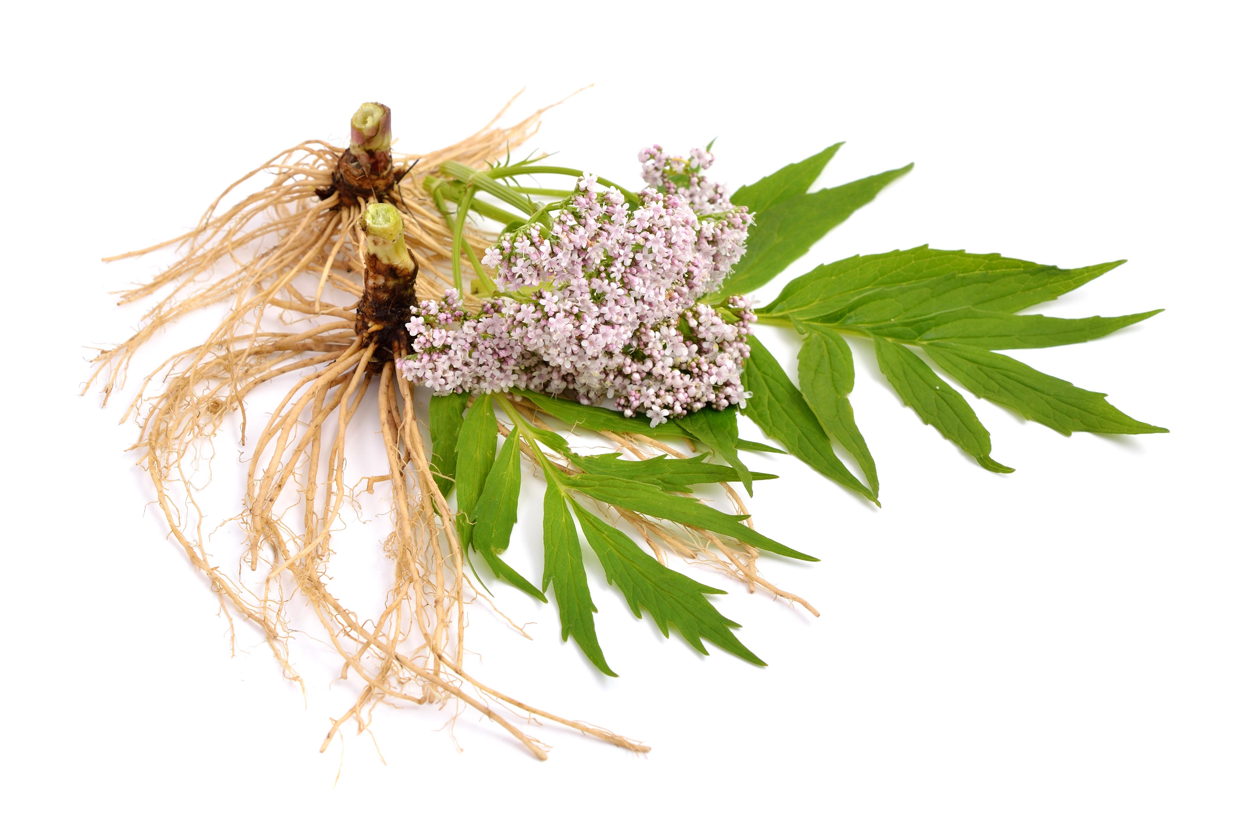 Gyógynövények, hogy lefogyjon