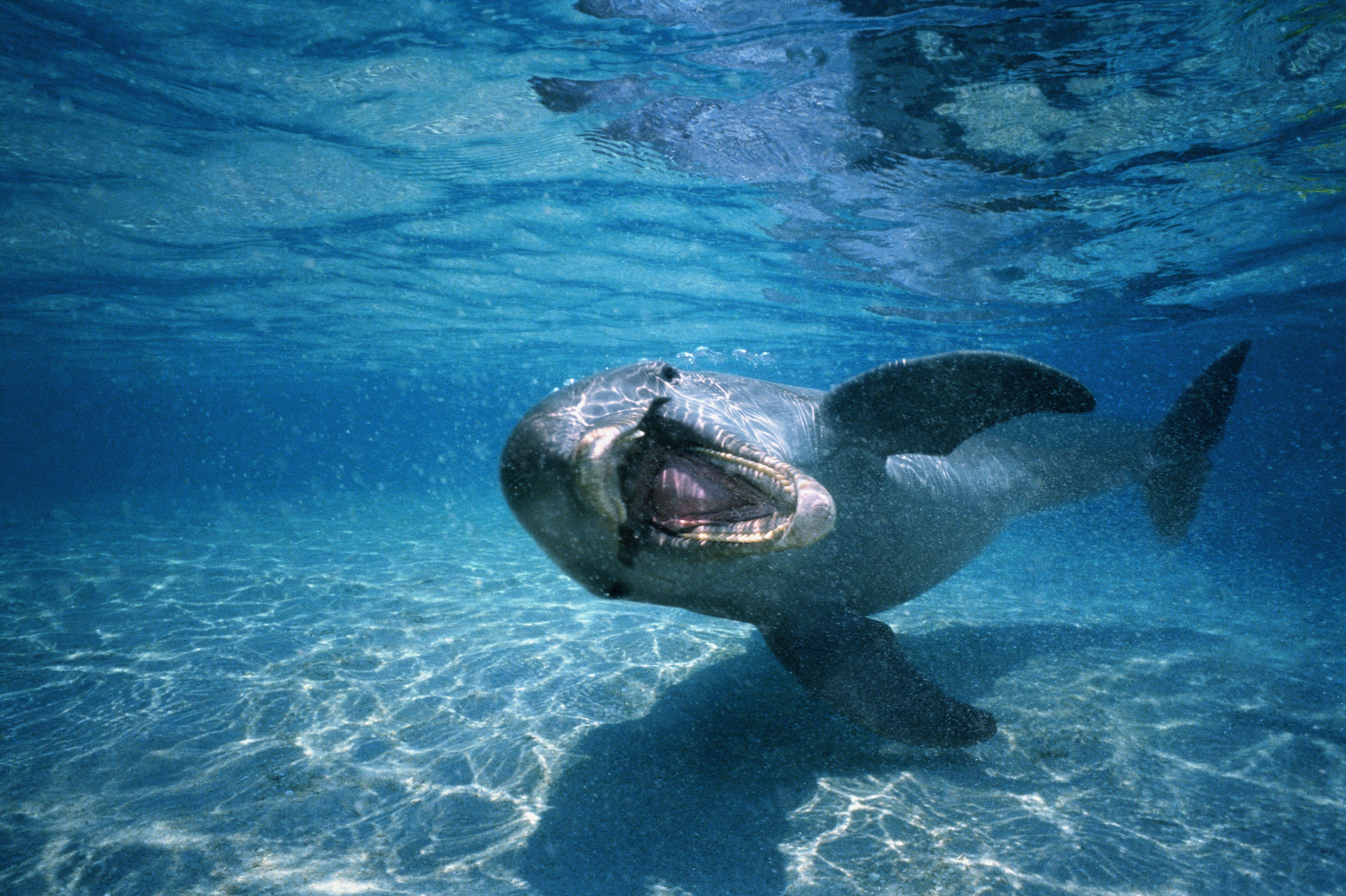 filmy sex delfinów vid orgia rodzinna