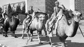 Dawne zdjęcia Gdańska. Kto pamięta taki Wrzeszcz i taką Zaspę?