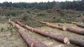 Łeba: Wycięto kilkaset drzew w strefie nadmorskiej. Andrzej Strzechmiński: to jest rzeź na przyrodzie