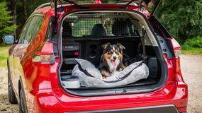 Przewieź psa w odpowiednich warunkach