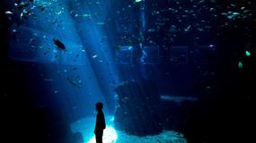 Singapur - Marine Life Park - największe oceanarium świata