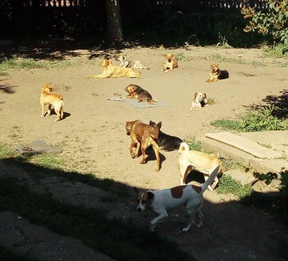 Mnogi psi su našli spas u azilu Društva za zaštitu životinja