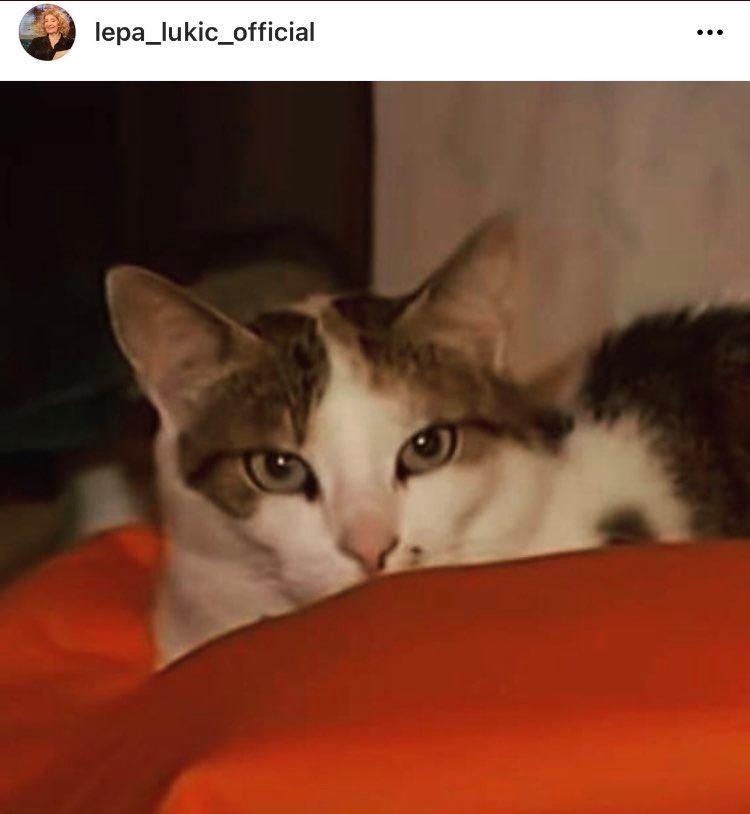 Mačka Lepe Lukić