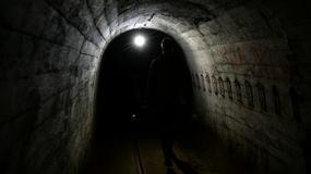 Nietoperze w dawnych niemieckich bunkrach Międzyrzeckiego Rejonu Umocnionego