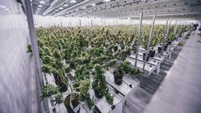 Tak wygląda fabryka największego producenta marihuany na świecie [GALERIA]