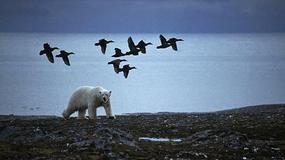 """Wystawa polarnej fotografii przyrodniczej """"Ptaki Spitsbergenu"""""""