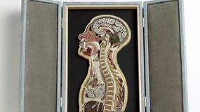Nikada ne biste pogodili od čega su ove slike ljudske anatomije