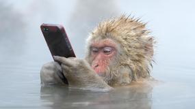 Wildlife Photographer of the Year - głosowanie publiczności na najlepsze zdjęcie przyrodnicze 2014