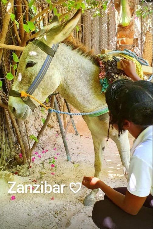 Ljubimac iz Zanzibara