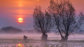 Biebrzański Park Narodowy - wielkie atrakcje największego parku w Polsce