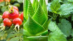 10 biblijnych roślin o wyjątkowych właściwościach zdrowotnych - żywią i leczą do dziś