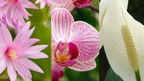 Kwiaty doniczkowe, które produkują w nocy tlen - idealne do sypialni: storczyk, skrzydłokwiat, aloes