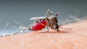 Ukąszenia komarów - jak złagodzić świąd, ból i opuchliznę?