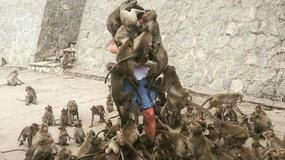 Čovek s torbom punom hrane + gomila gladnih majmuna = INTERNET BLAGO