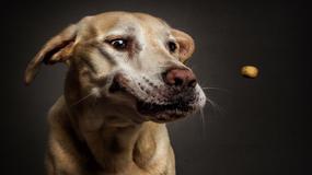 Portreti pasa dok hvataju poslasticu