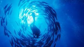 Egipt - Podwodne zwiedzanie
