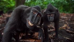 KRALJEVI POZERAJA Ovo su najveseliji članovi životinjskog carstva, evo i zašto