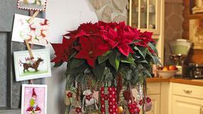 Gwiazda betlejemska - niezwykłe dekoracje na święta