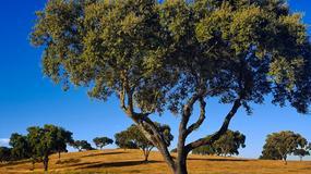 Alentejo – nieodkryty region Portugalii