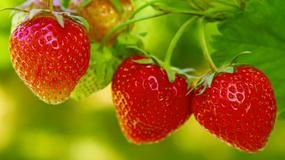 Truskawki - składniki odżywcze, jakie choroby leczą, kiedy szkodzą