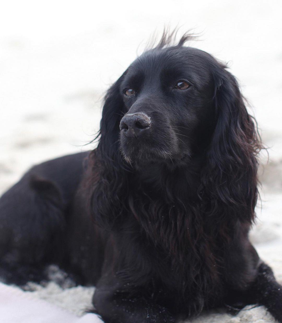 Скончался любимый пёс семьи Кейт Миддлтон и принца Уильяма: сообщение герцогов в Instagram и реакция Джеймса Миддлтона