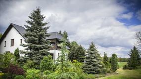 Przydomowy ponad 20-letni ogród w Skierniewicach