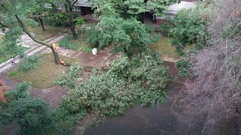 Nevreme oborilo drvo i na Novom Beogradu