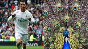 EURO2016 Fudbaleri i životinje - neverovatna sličnost! /FOTO/