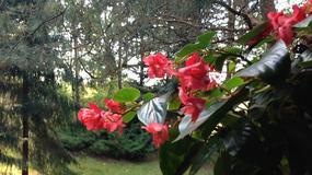 Przykładowe fotografie wykonane aparatem w iPhone 5