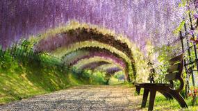 Najpiękniejsze tunele drzewne na świecie