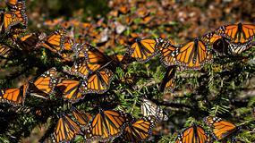 ŠARENI RAJ Ovako izgleda mesto na kom se SKRIVAJU leptiri