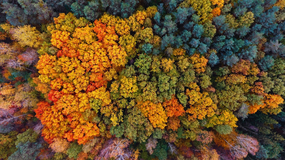Piękna złota jesień z lotu ptaka. Zachwyć się urodą polskich lasów!