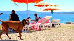 Plaża dla psów w Crikvenicy zapewnia wszelkie wygody i specjalne menu
