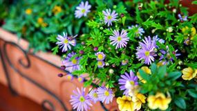 Kwiaty na balkon - jak wybrać i pielęgnować?