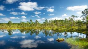 Park Narodowy Lahemaa - dziewicze lasy, mokradła i zabytki historii