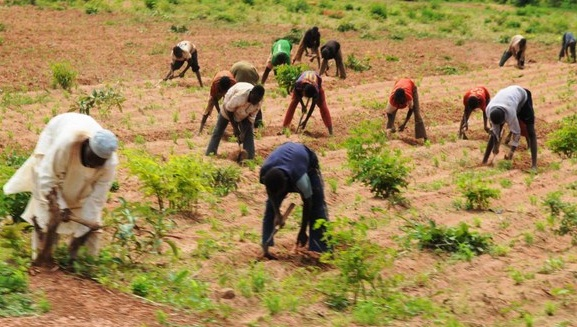 600 farmers to benefit from FG's potato value chain programme in Niger |  Pulse Nigeria
