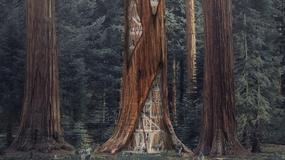 Wieżowce wewnątrz drzew? Takiego projektu jeszcze nie było!