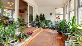 Dziewięć powodów, dla których warto mieć rośliny w domu
