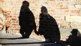 PROLEĆNI DAN USRED NOVEMBRA Beograđani iskoristili lep dan za šetnju, ali ne odriču se zimskih jakni