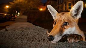 Zwycięzcy konkursu Wildlife Photographer of the Year 2016 - najlepsze zdjęcia przyrodnicze