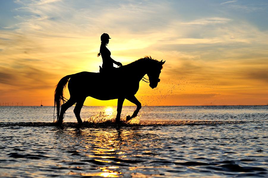 Kocham Konie i Jazdę Konną