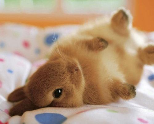 Kochamy króliczki