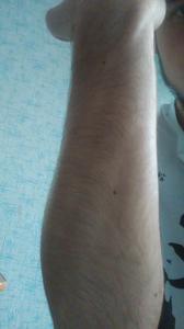 Tatuaż Na Owłosionej Ręce Zapytajonetpl