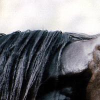 Konie całym moim światem !